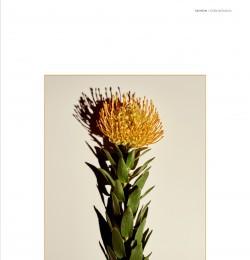 Flora Botanica